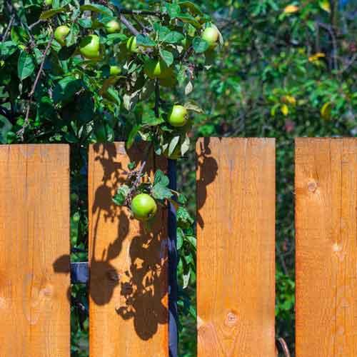 Afstand til skel - står træet for tæt ved naboen?
